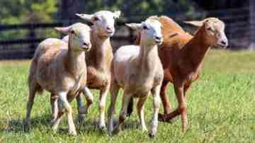 Регистрация крестьянских (фермерских) хозяйств