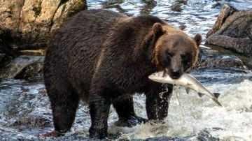 Сборы за пользование объектами животного мира и за пользование объектами водных биологических ресурсов
